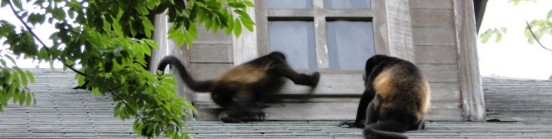 cropped-old-howler-monkey-and-friend-playa-bonita-panama.jpg