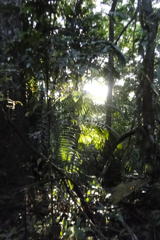 Dappled Sunlight through Palm leaves, Plantation Road, Panama
