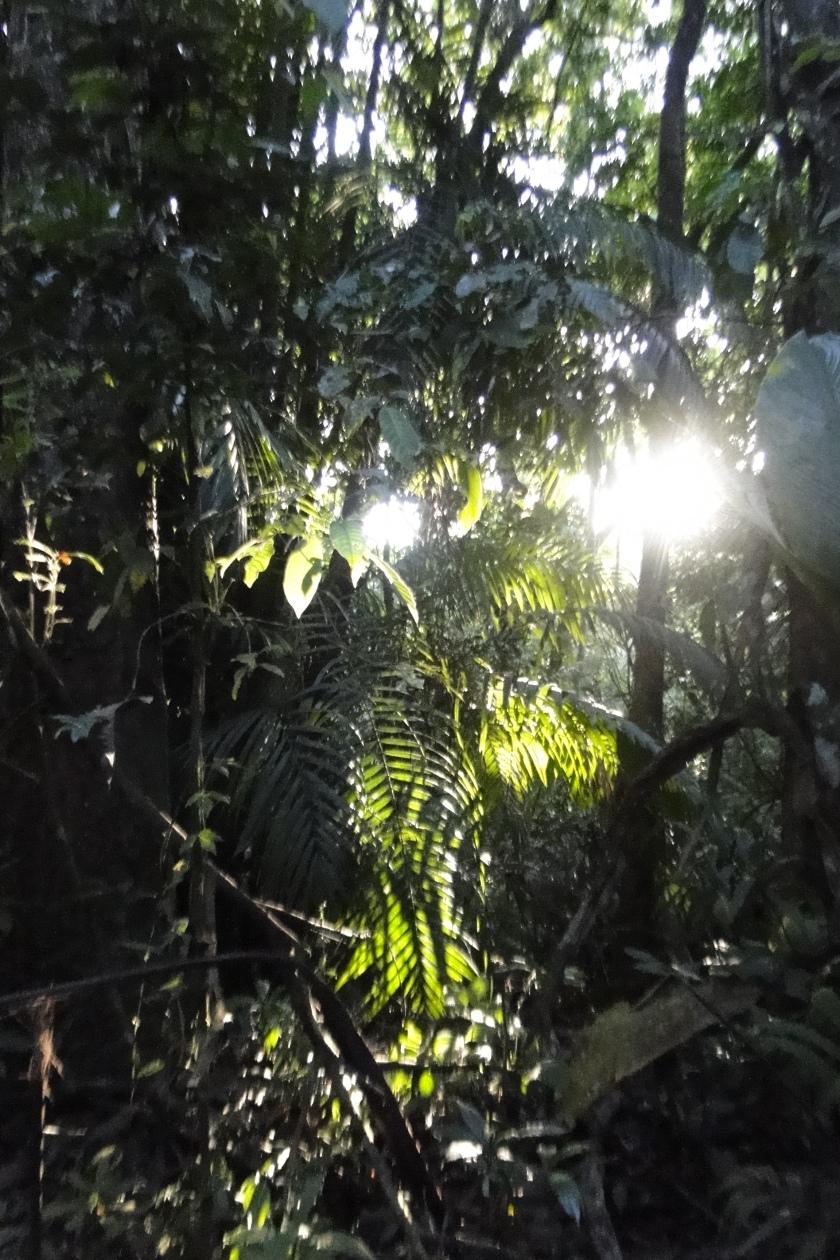 Dappled sunlight through trees, Plantation Road, Panama